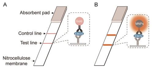 纳米酶应用研究领域取得新进展